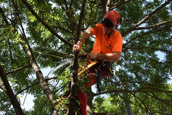 orezy stromov