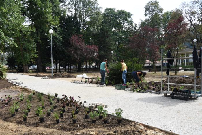 sadia záhony v parku