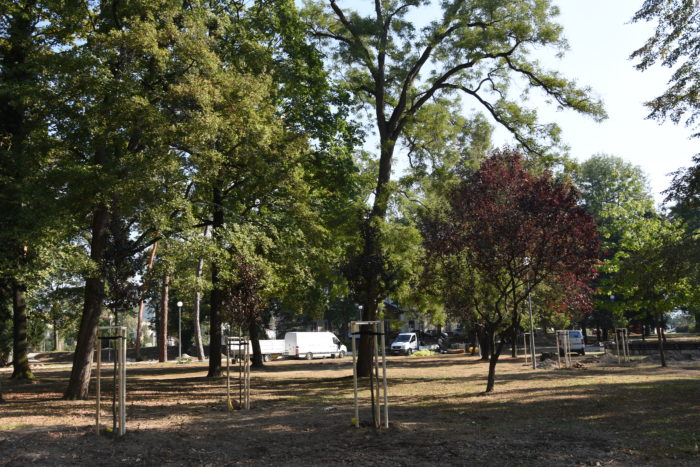 nové stromy v parku