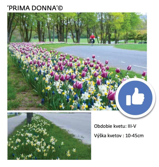 vitazne kvety juh
