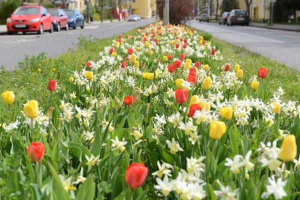 kvety na Rázuske