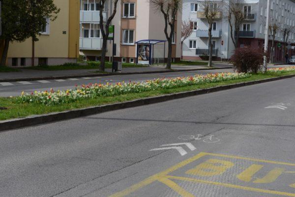 kvety na Razuske2